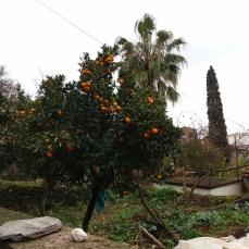 Det er koldt, men det er syden. Der er palmer og appelsintræer